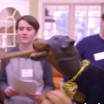 Video: Triumph the Insult Comic Dog talks to college voters about political correctness