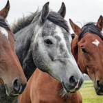 Do We Really Need a Federal Ban on Horse Meat?